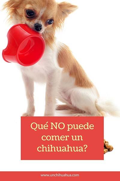 Qué NO puede comer un perro chihuahua ?