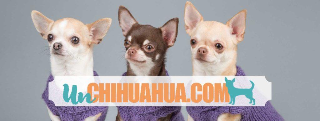 3 chihuahuas cabeza de manzana