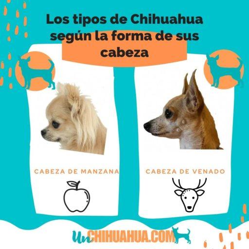 Diferencias en las formas de la cabeza de ambos tipos de chihuahuas.