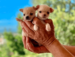 criadero chihuahua en valencia