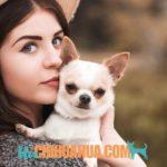 ¿Quieres comprar un chihuahua barato? En nuestra página recibimos muchas consultas sobre dónde comprar un chihuahua a buen precio. ⚠️ Pero ojo, aquí te contamos por qué comprar chihuahuas baratos, no siempre es la mejor opción.