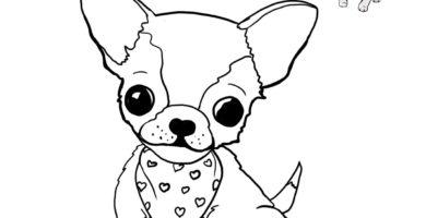 chihuahua para colorear o pintar gratis