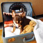 las mejores camas para un perro chihuahua