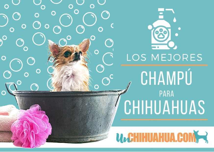 Los mejores champú para perros chihuahuas - Reseñas y link de compra