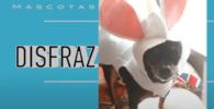 disfraz de conejo para chihuahua