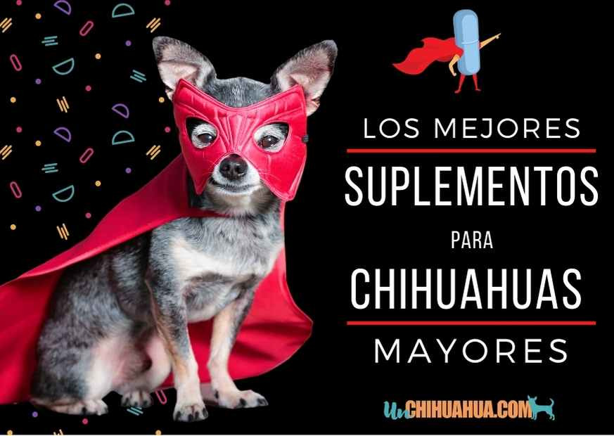 Los mejores suplementos para ayudar a los chihuahuas mayores a vivir mejor