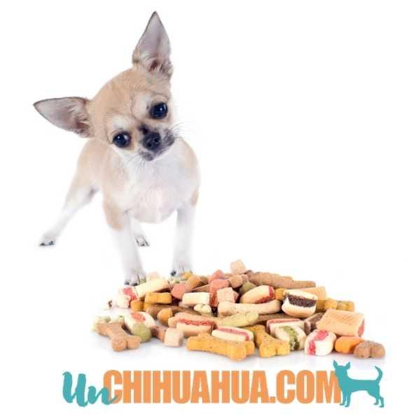 ¿Por qué mi chihuahua no come? - Razones por las que tu pequeño perro no quiere comer