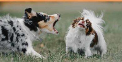 síndrome del perro pequeño