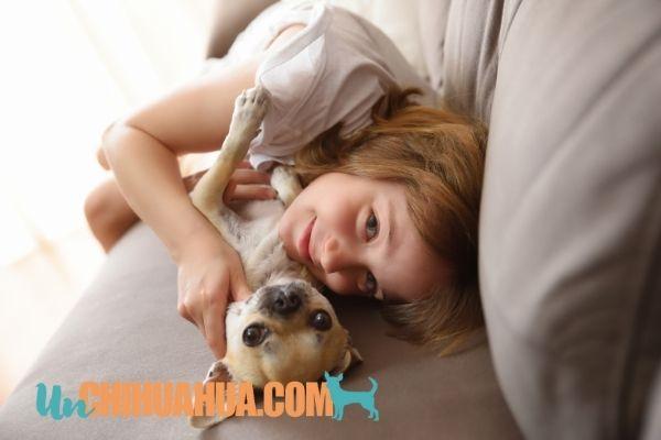 Puedes disfrutar de tu chihuahua en el sofá si sigues nuestros consejos para que no lo dañe
