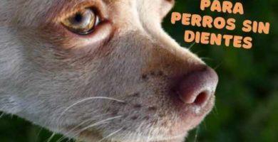 comida para perros sin dientes