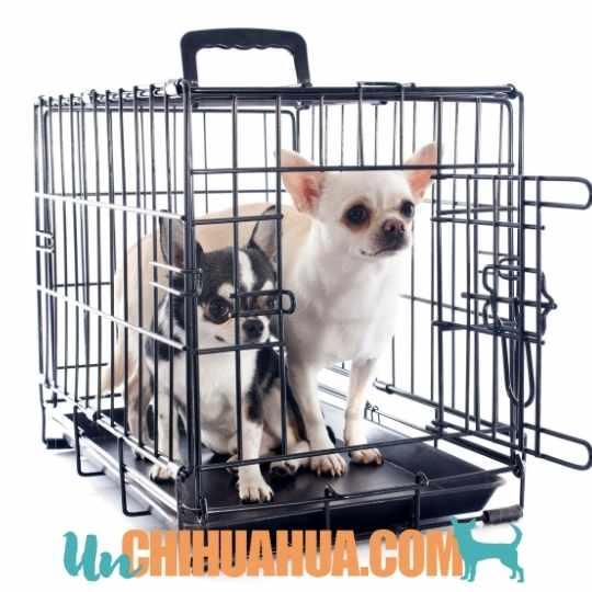 entrenamiento con jaulas chihuahuas