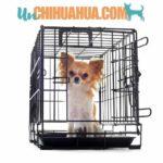 entrenamiento con jaulas para chihuahuas