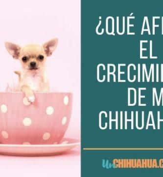 Tabla de Crecimiento del Chihuahua