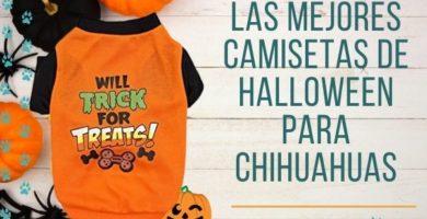 Las mejores camisetas de halloween ara perros pequeños, ideales para chihuahuas